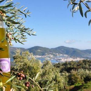 olive in green scenery